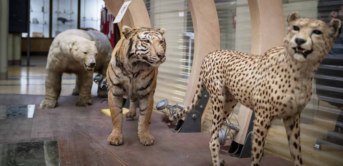 bologna zoological museum