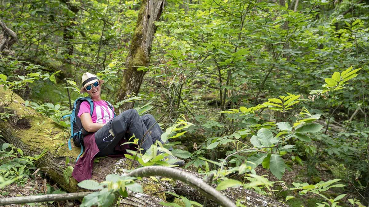 hiking via degli abati forest