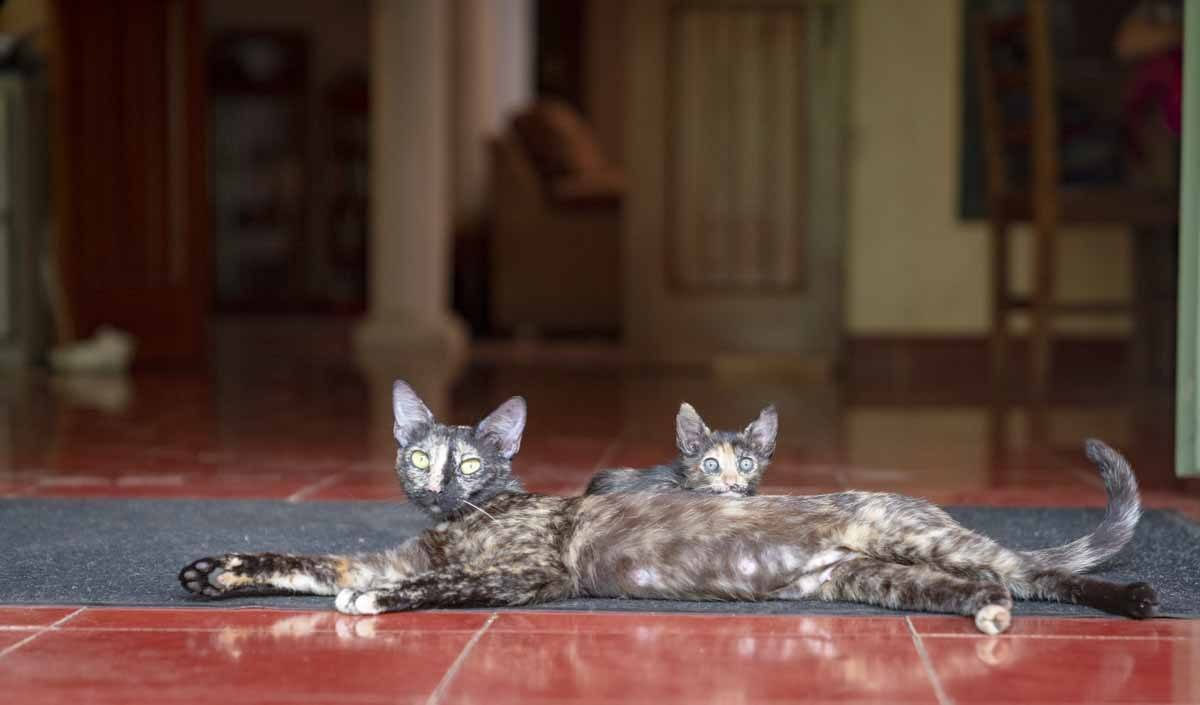 casa hamaca kittens