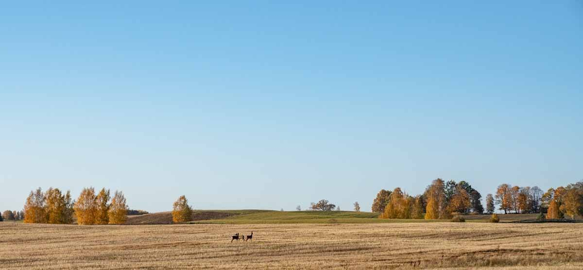 aluksne autumn fields
