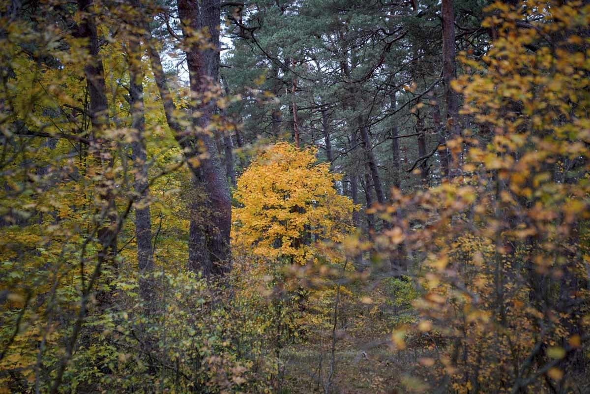latvia autumn forest colours