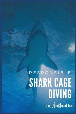 australia shark cage diving