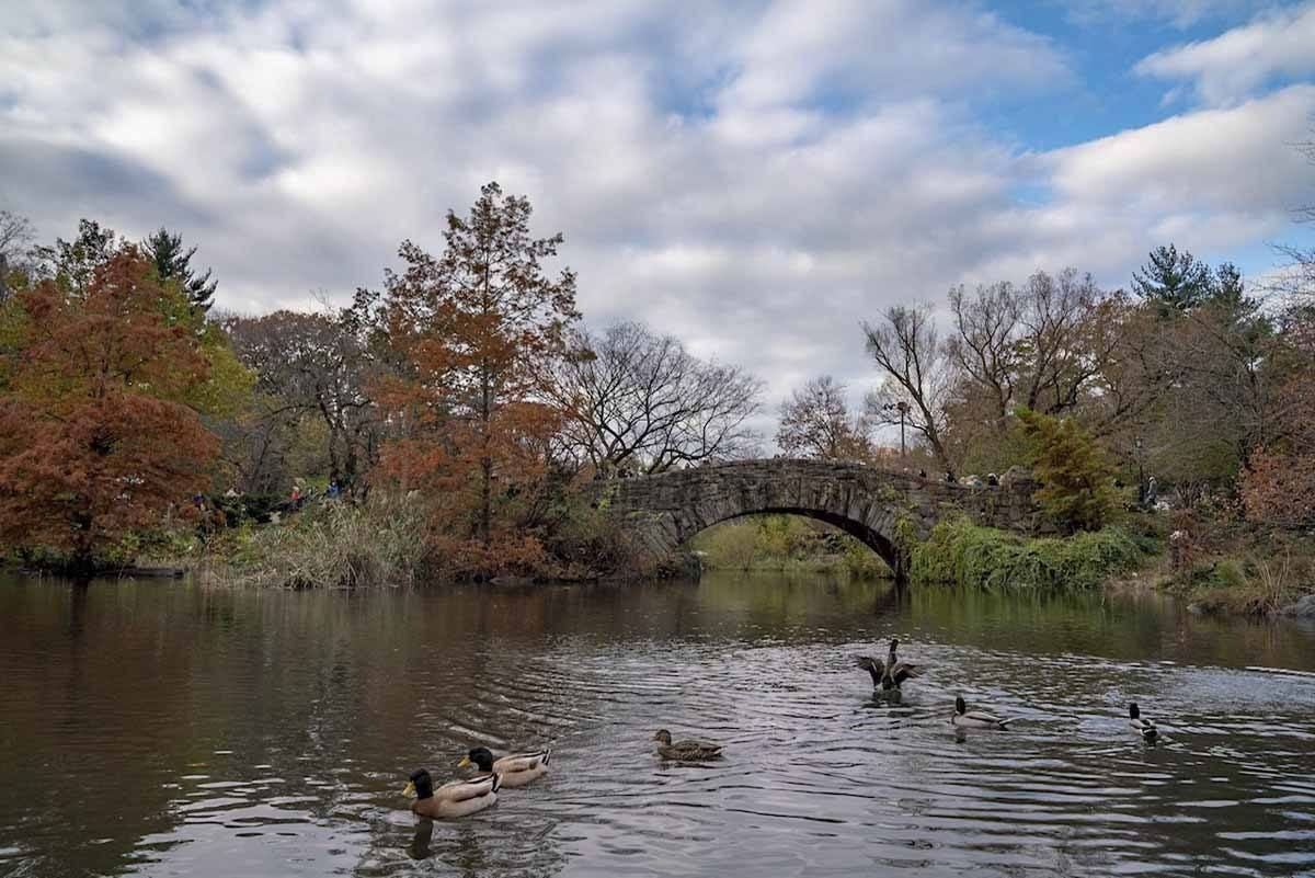 central park unusual NYC
