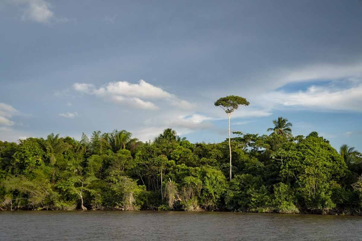 essequibo river tour view from boat