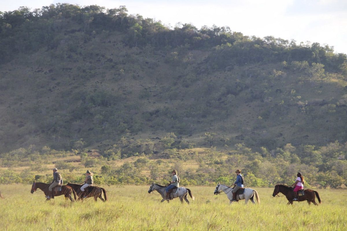 horse riding in guyana at saddle mountain ranch the crowded planet