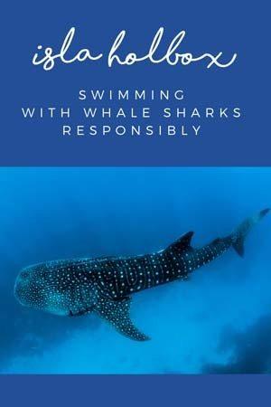 isla holbox whale sharks pin
