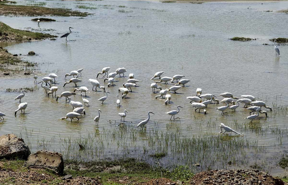 yala national park water birds