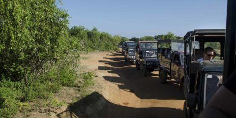 yala sri lanka jeeps