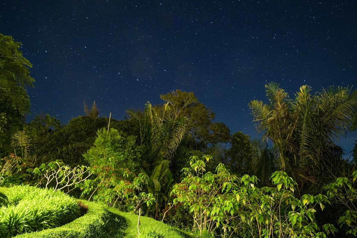 night rice terrace view bali