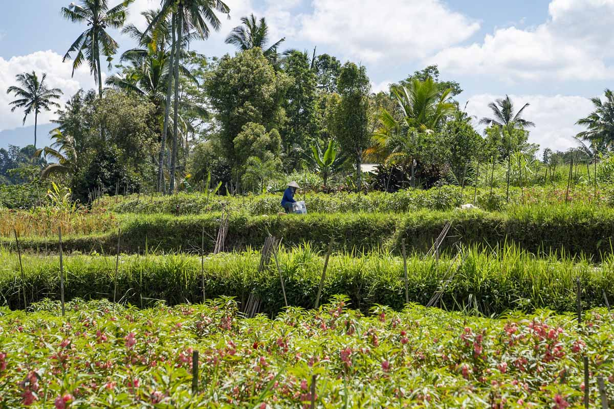 things to do ubud rice fields walk