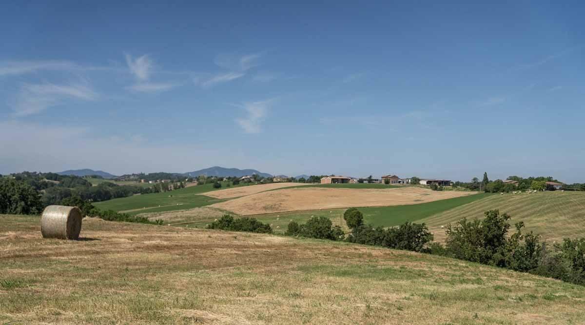 collines de Fidenza à travers la francigena