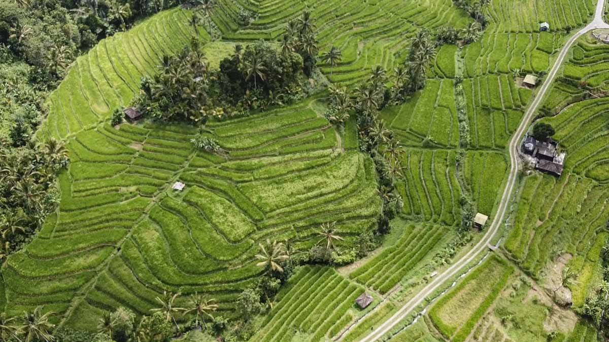 Jatiluwih Rice Terraces, Bali - A Complete Guide | The