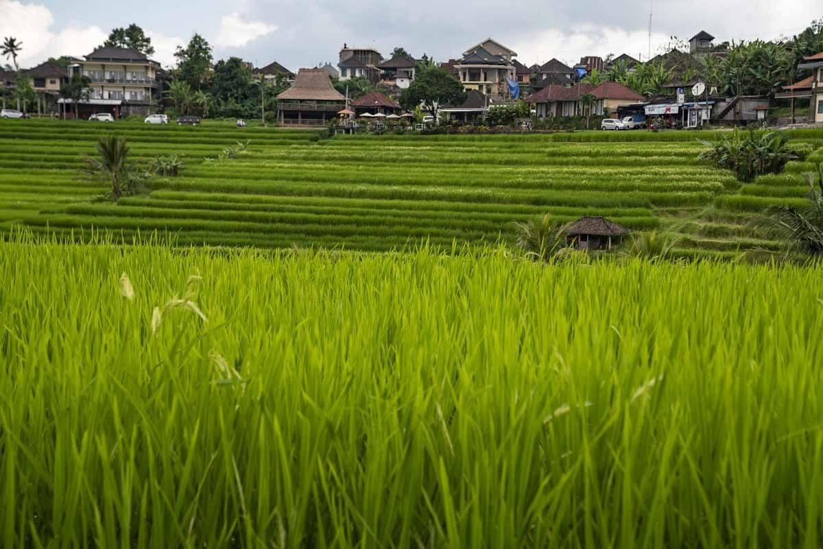 jatiluwih village bali