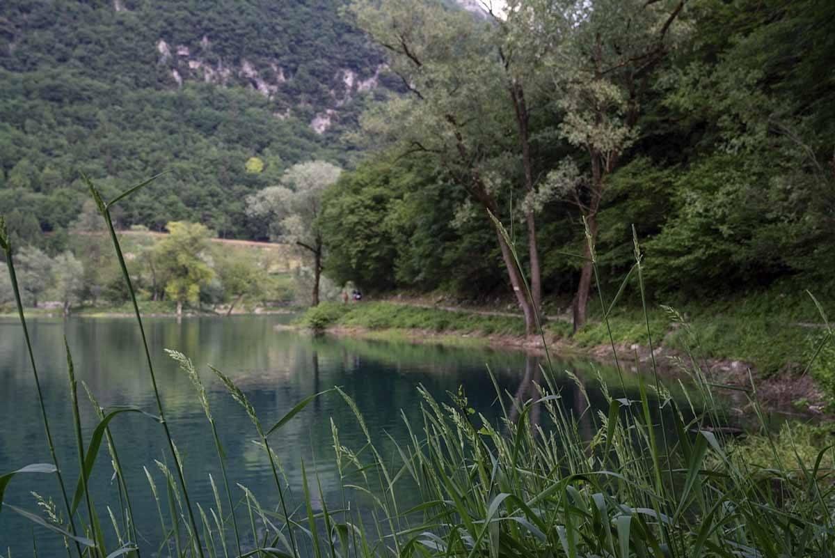 lake tenno reeds