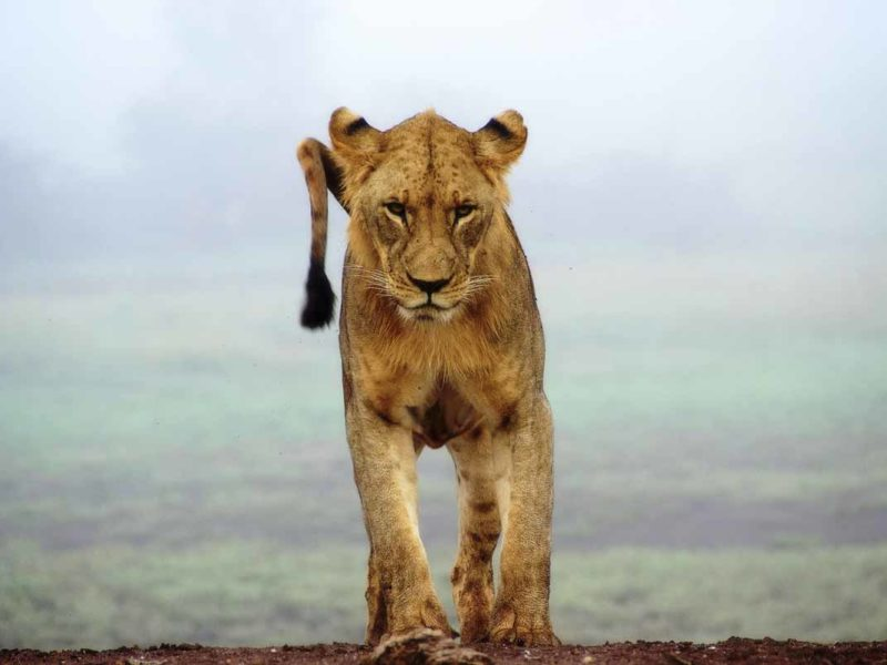 places to visit in kenya lion cub
