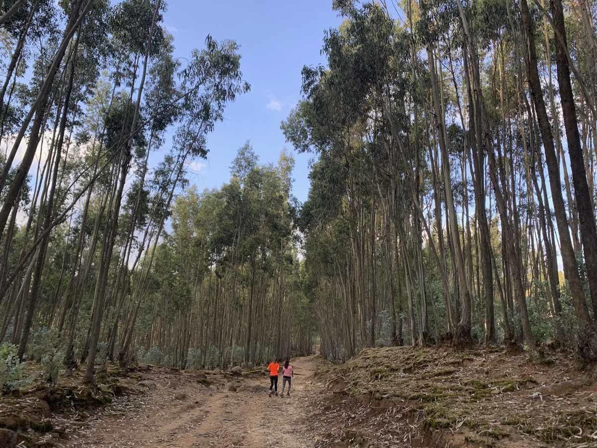 running in forest ethiopia