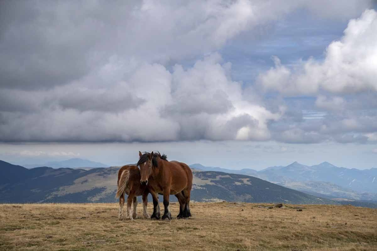 horses mountain pass pyrenees