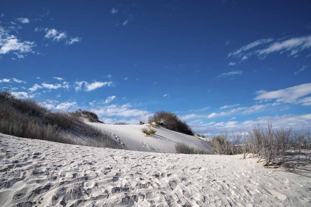 dune life nature trail view