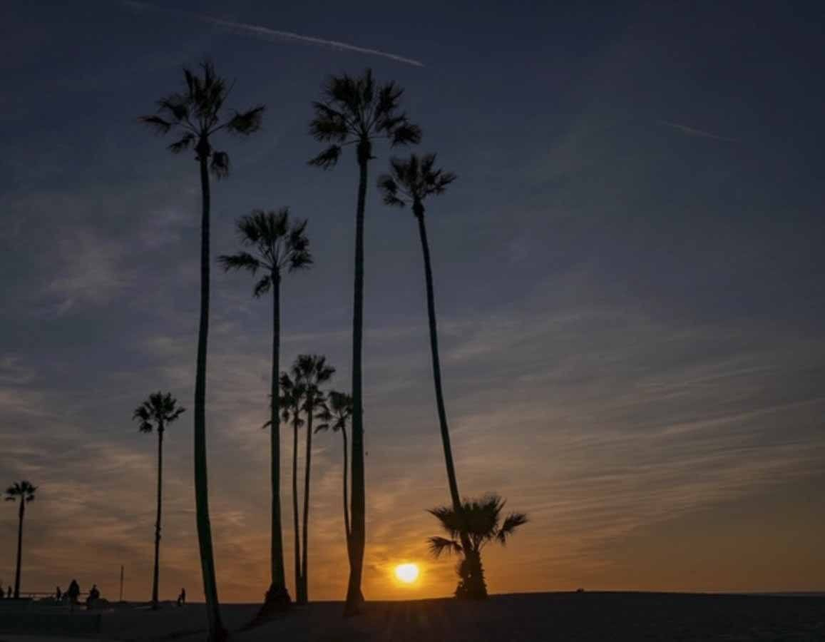 venice beach sunset palms