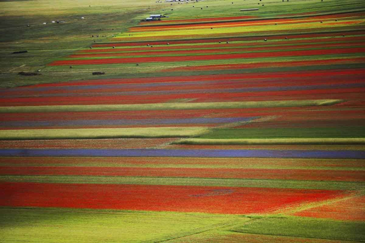 castelluccio italy in june
