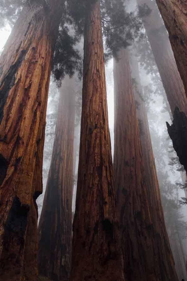 sequoia road trip los angeles